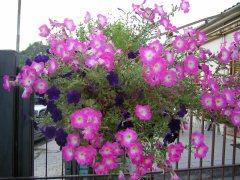 ennio-fiori