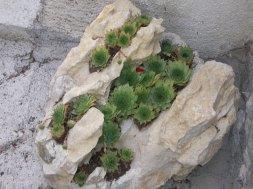 roccia-piante-grasse